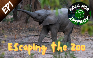 Escaping the Zoo: Nelson the Elephant
