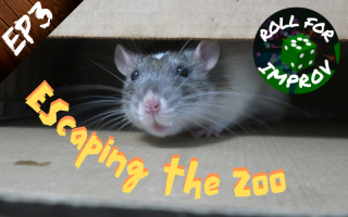 Escaping the Zoo: Shnishki the Rat